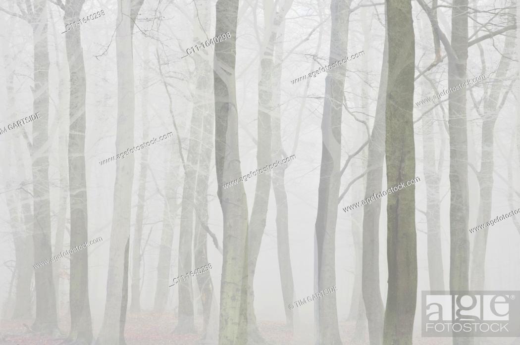 Stock Photo: trees in mist.