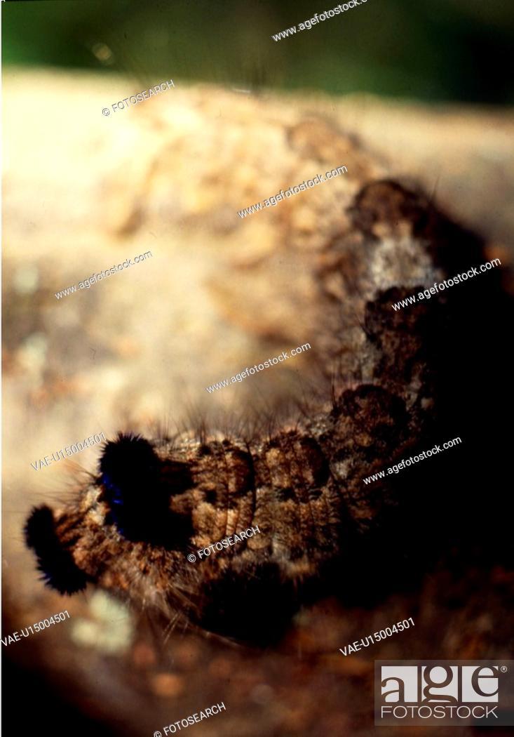 Stock Photo: branch, nature, caterpillar, closeup, scene, animal, landscape.