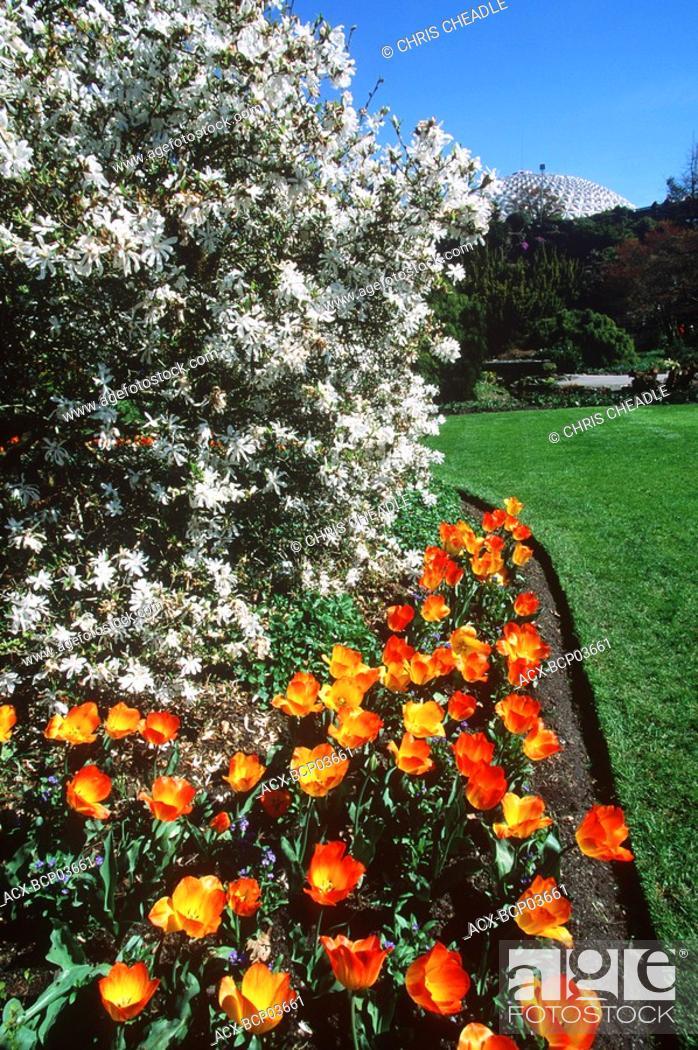 Stock Photo: Queen Elizabeth Park, spring tulips, Vancouver, British Columbia, Canada.