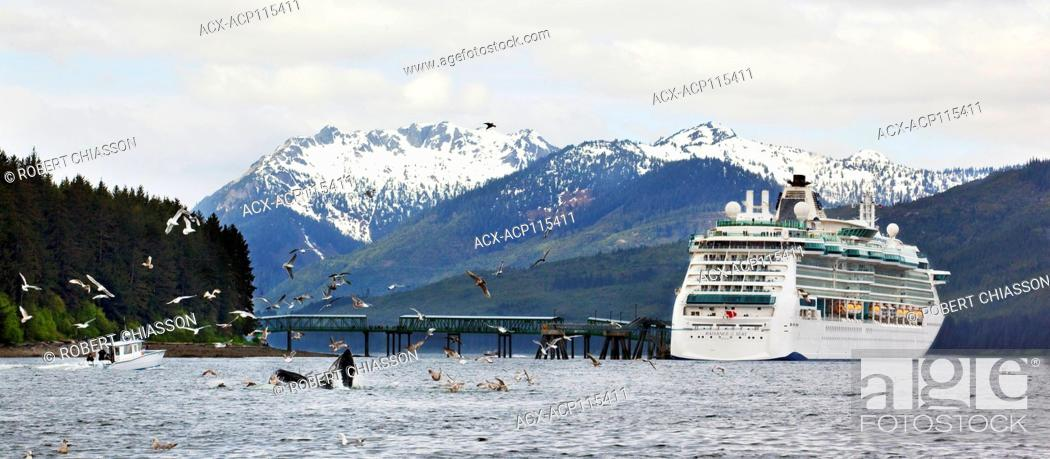 Stock Photo: Humback whales feeding near a cruise ship docked at a berthing facility in Icy Strait Point, Alaska, U.S.A.