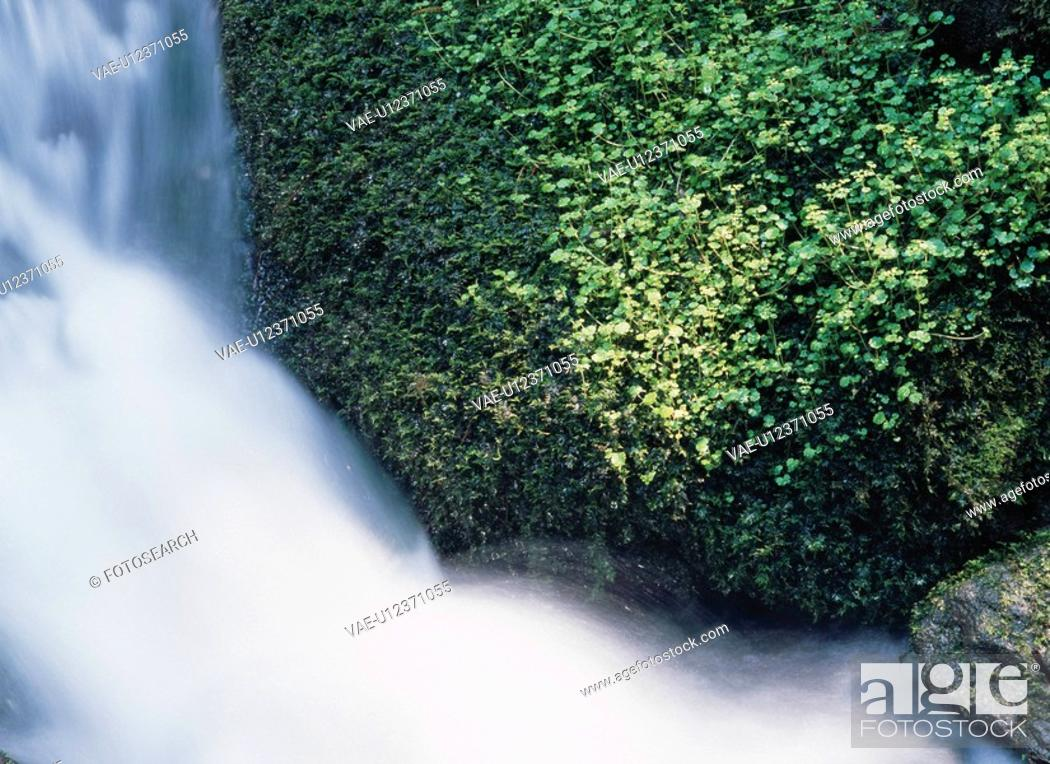Stock Photo: Plants By Waterfall.