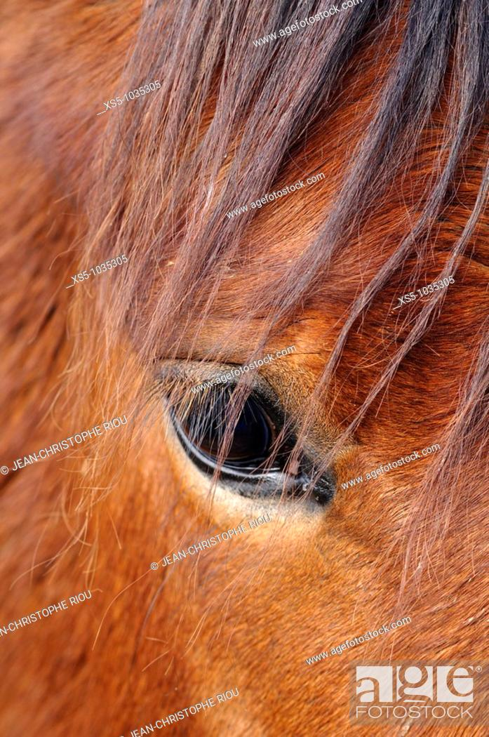 Stock Photo: Horse's eye.