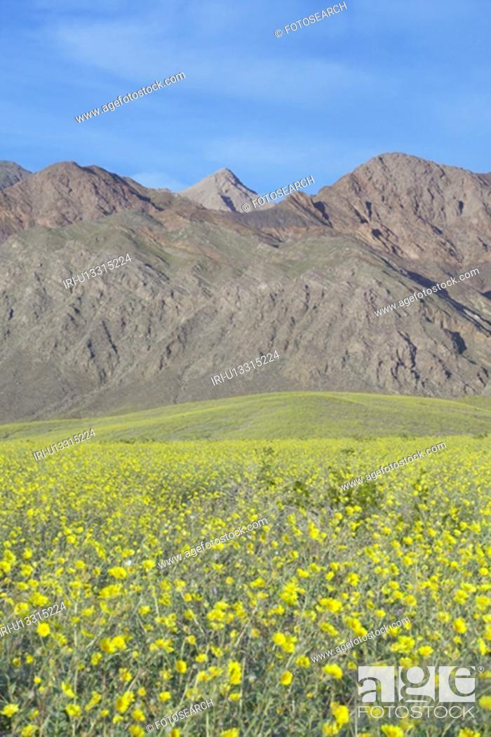 Stock Photo: Mountain view and spectacular desert gold and various spring flowers.