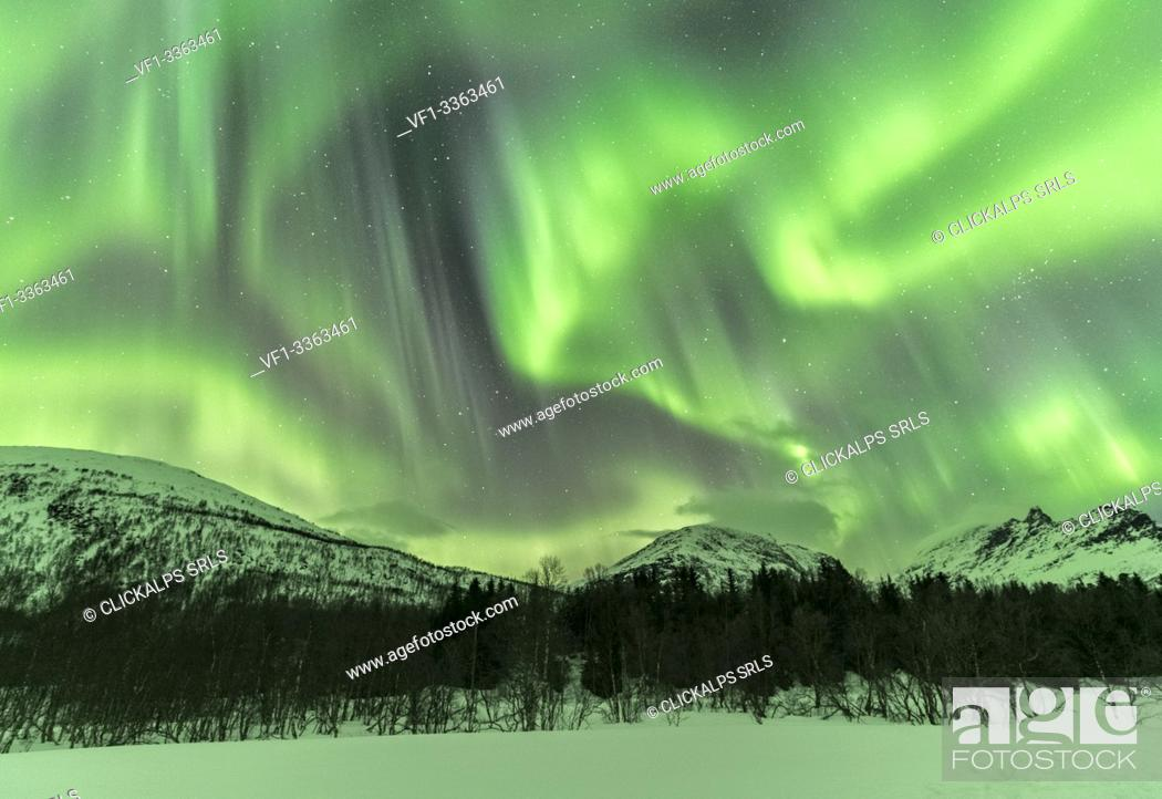 Stock Photo: Northern lights in the sky above mountain peaks and trees. Skoddebergvatnet lake, Grovfjord, Troms county, Northern Norway, Norway.