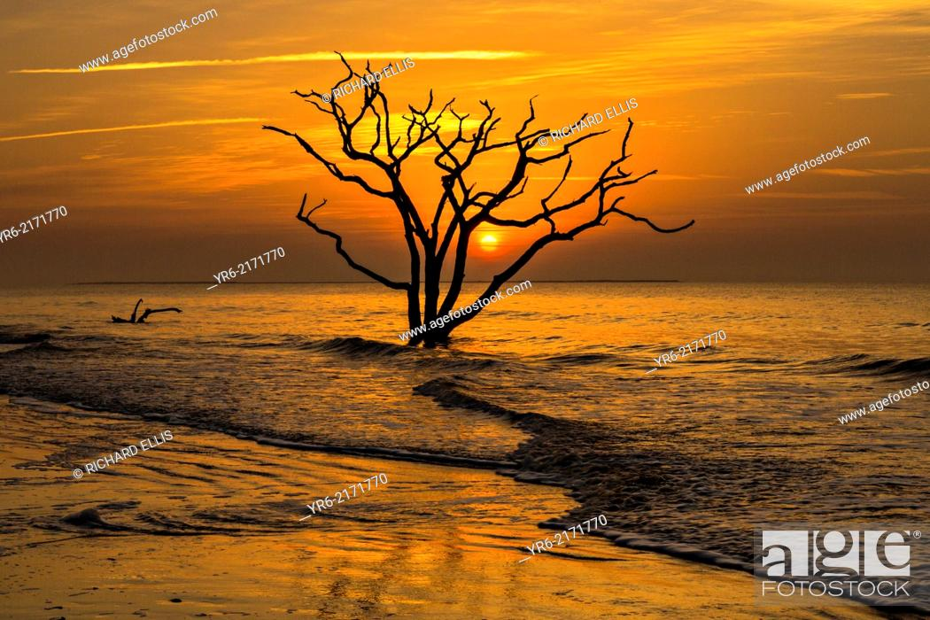 Stock Photo: Sunrise over Boneyard Beach at Botany Bay, Edisto Island, South Carolina. Due to natural beach erosion the coastal forest is slowly being swallowed by the.