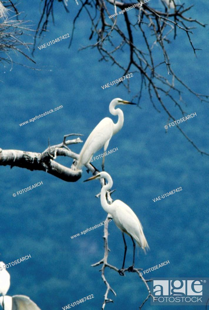 Stock Photo: branch, nature, tree, mountain, scene, couple, landscape.