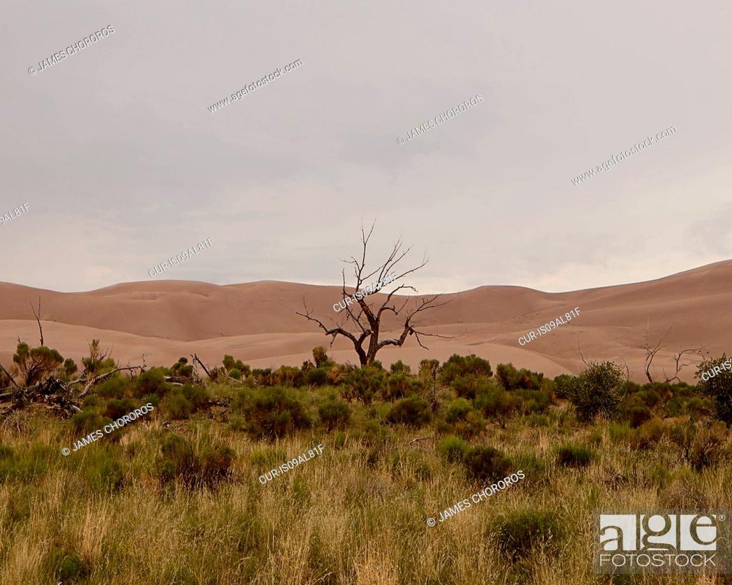 Imagen: A tree in Sand Dune National Park, Colorado, USA.