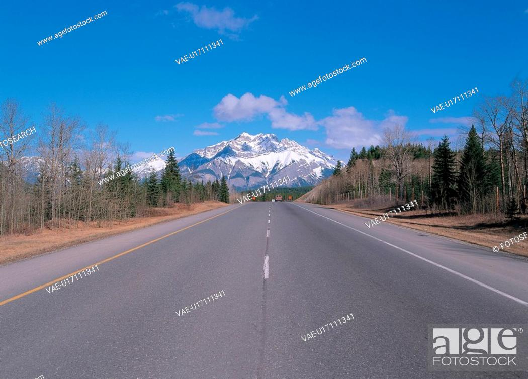 Stock Photo: tree, nature, sky, landscape, scenery, forest, road.