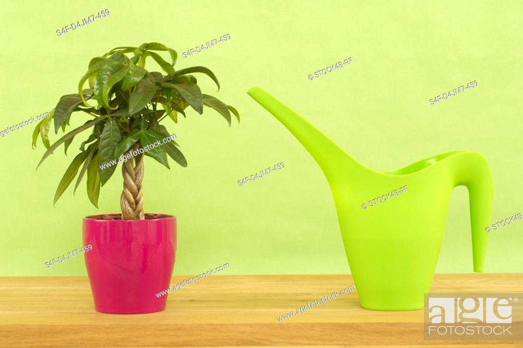 Stock Photo: Watering can and indoor plant.