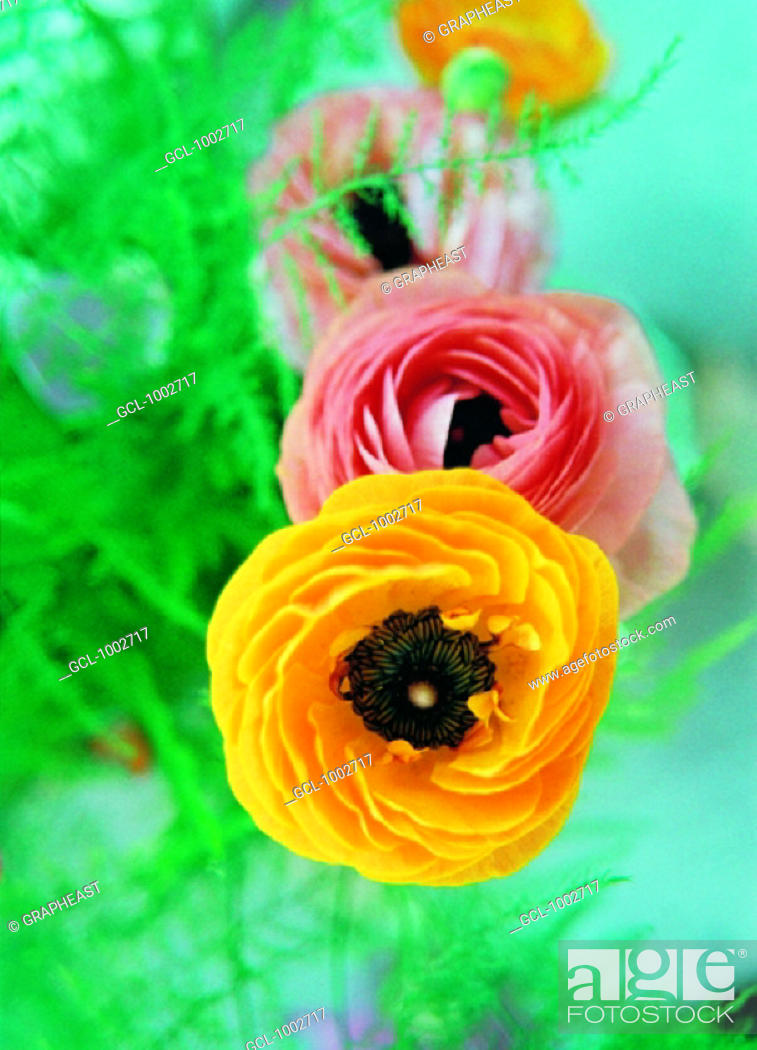 Stock Photo: Pink and yellow flowers.