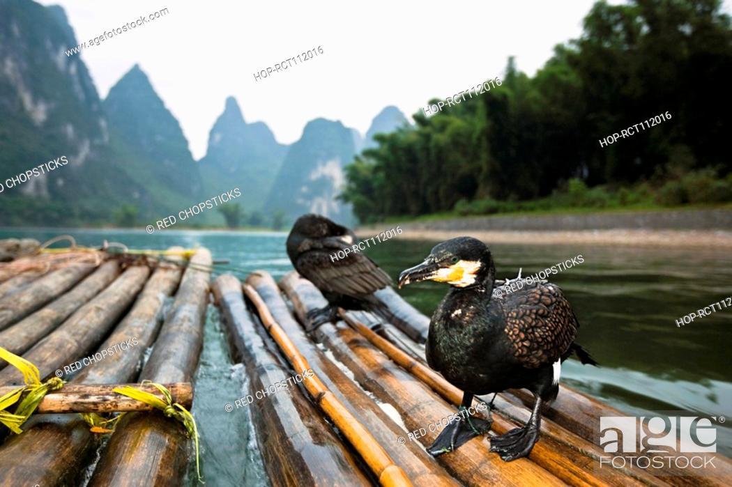 Stock Photo: Two seabirds on a wooden raft, Li River, XingPing, Yangshuo, Guangxi Province, China.