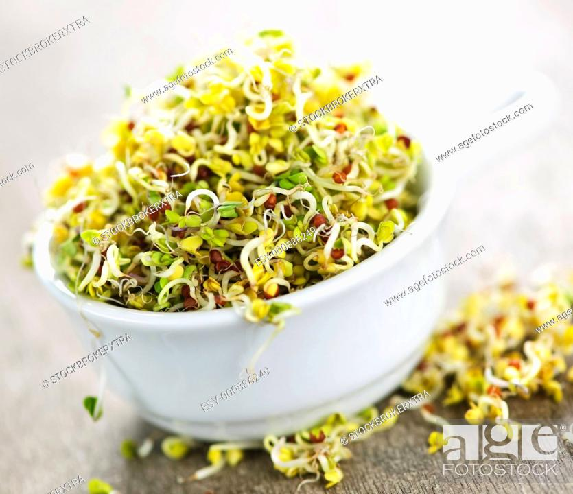 Stock Photo: Organic young alfalfa sprouts in a cup.