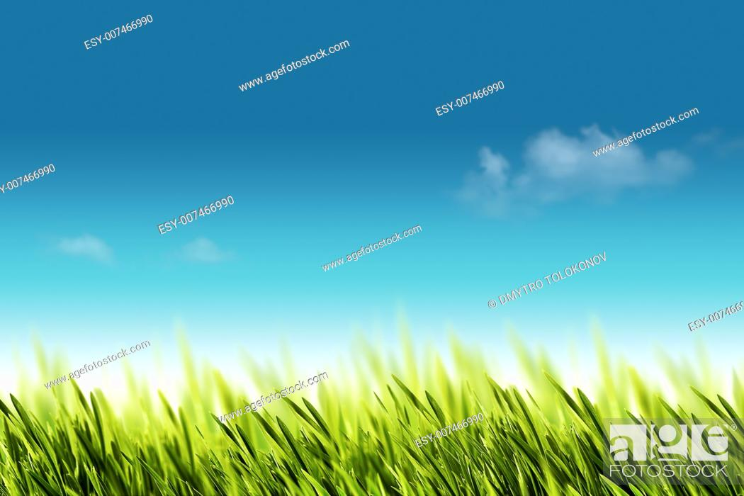 Stock Photo: Natural backgrounds with green foliage under bright summer sun.