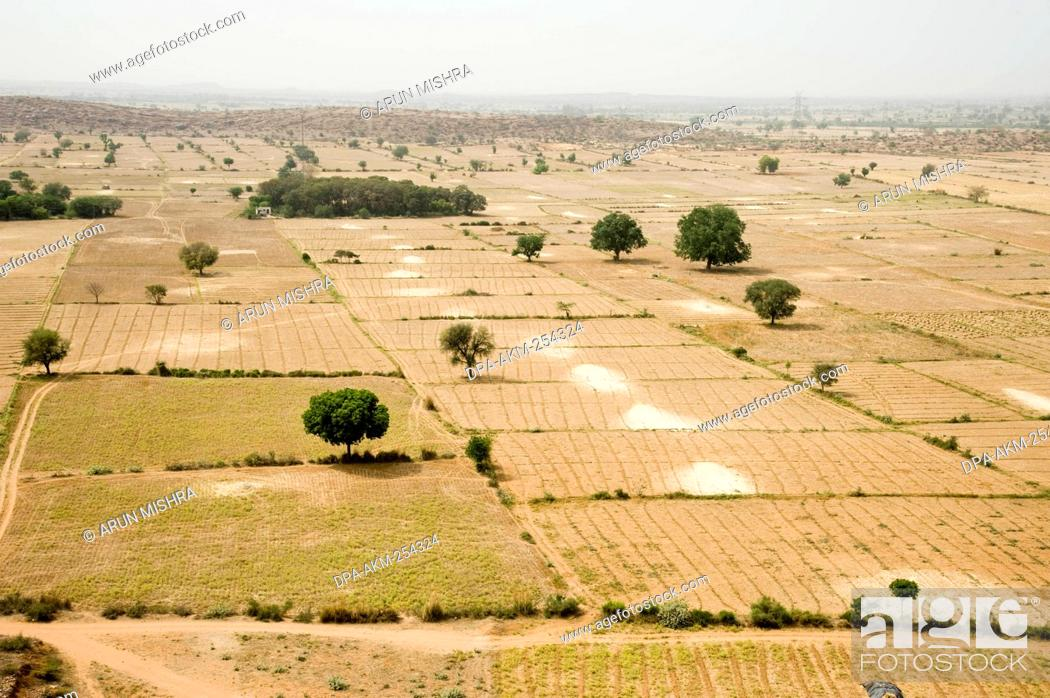 Stock Photo: Farming land, barsana, uttar pradesh, india, asia.