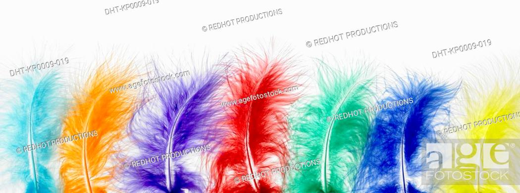 Stock Photo: Row of Coloured Feathers.
