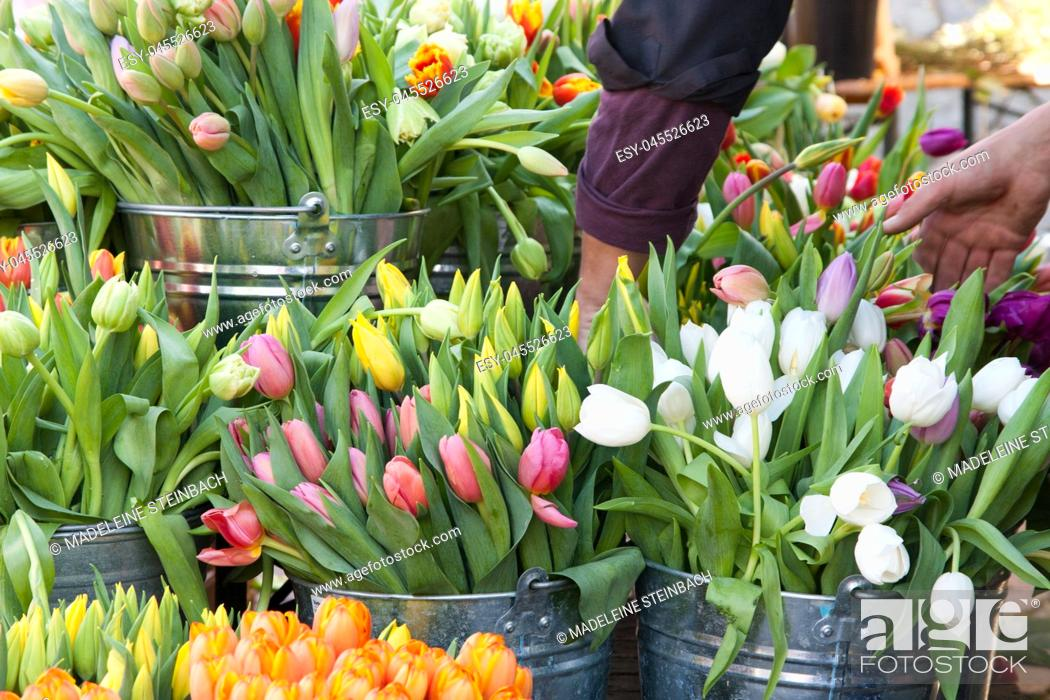 Stock Photo: Colorful tulips on display at the farmers market in spring.