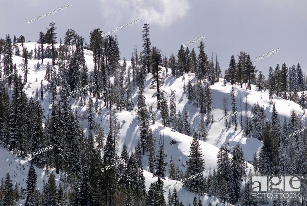 Stock Photo: Snow covered trees during February.