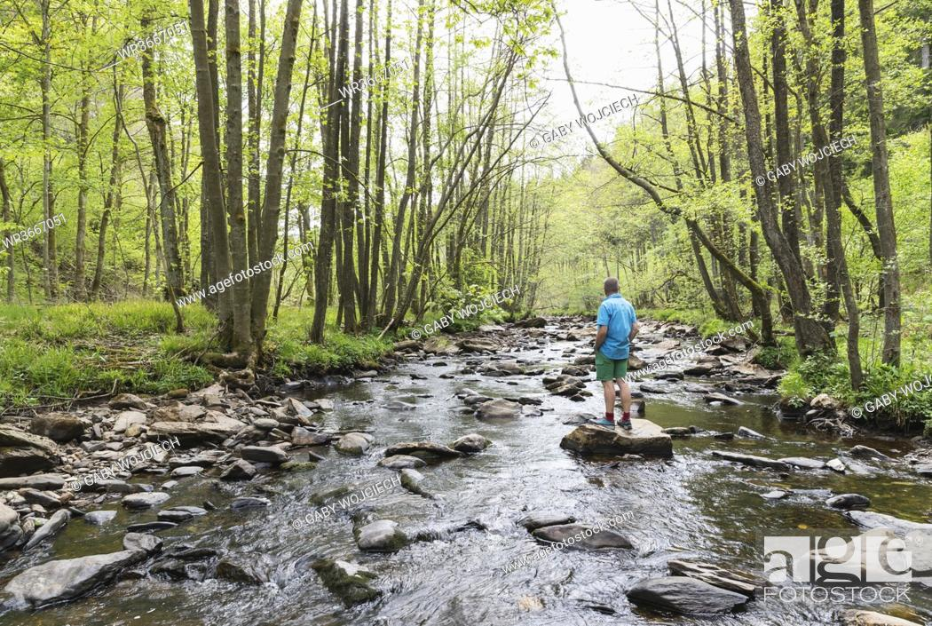Stock Photo: Senior man standing on rock in middle ofRurriver flowing through High Fens -EifelNature Park in spring.