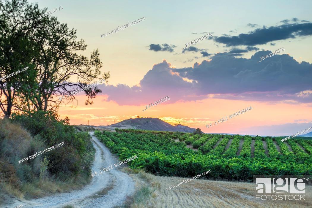 Stock Photo: Vineyards of Briones, La Rioja, Alava, Basque Country, Spain.