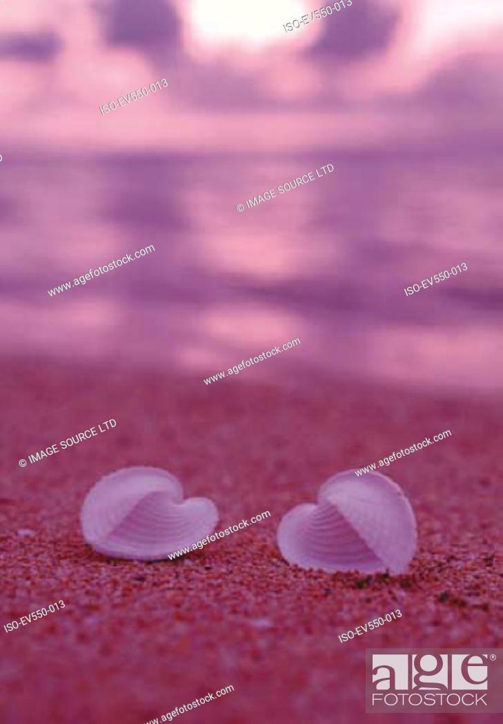 Stock Photo: Shells on beach.