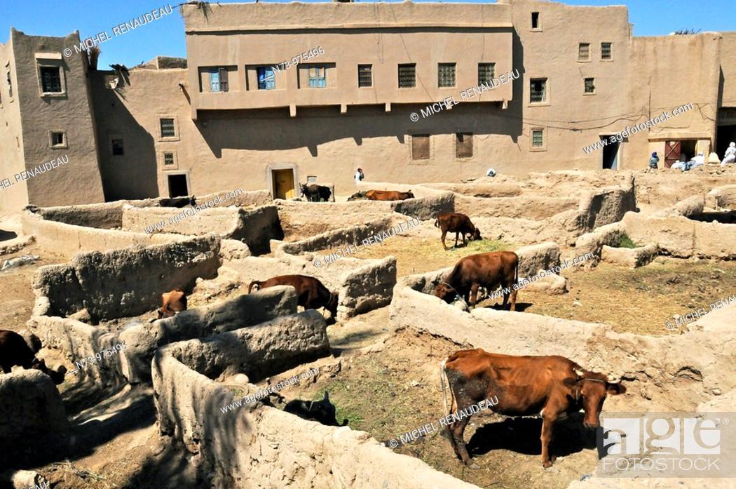 Maroc, Ksar Goulmima, parc à bestiaux à l\'intérieur, Sud, Marocain ...