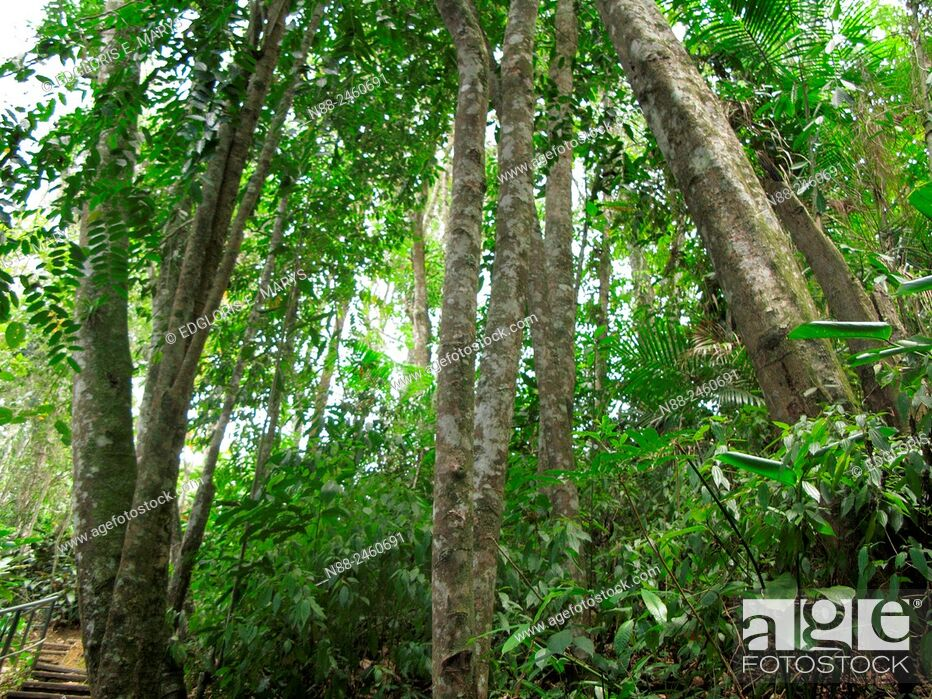 Stock Photo: Premontane rainforest, Paracotos, Venezuela.
