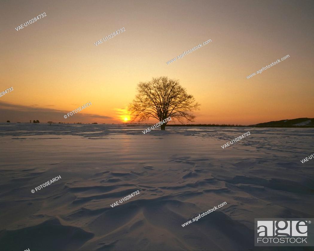 Stock Photo: Snowy field.