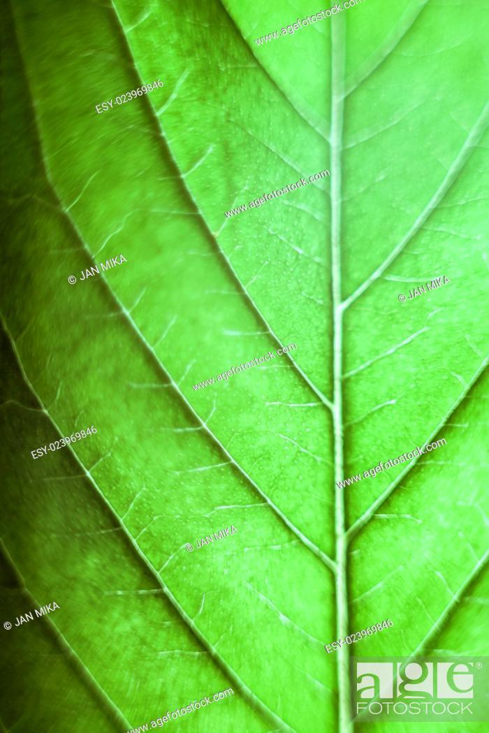 Stock Photo: Macro of green Cannabis leaf.