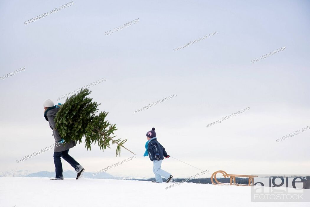 Stock Photo: Mother and son carrying christmas tree.