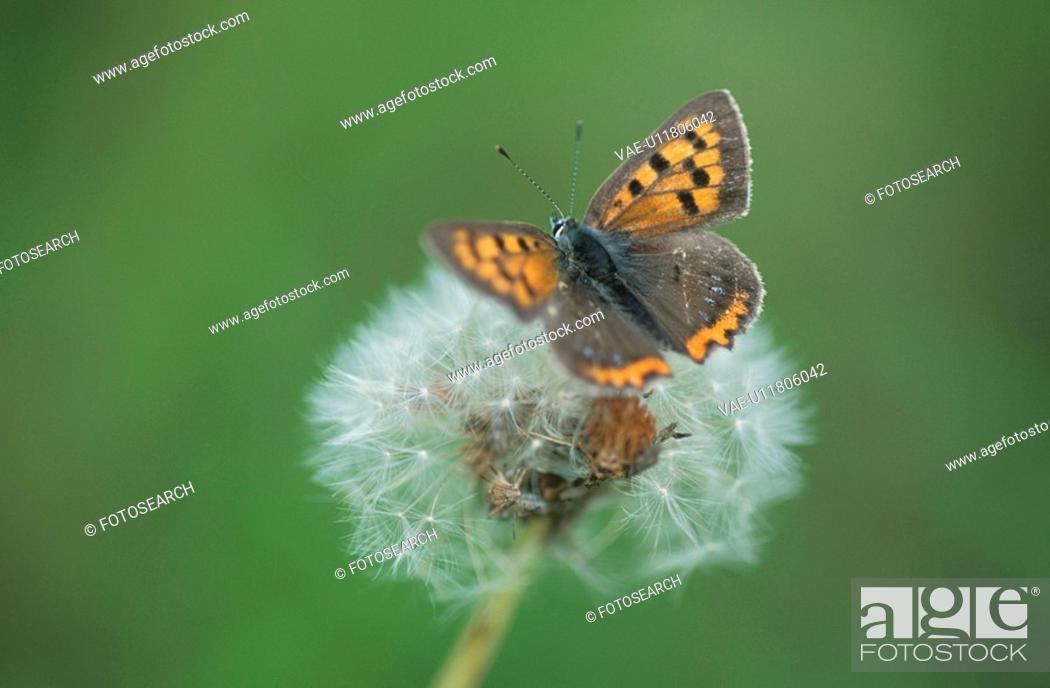 Stock Photo: Hairstreak Butterfly.