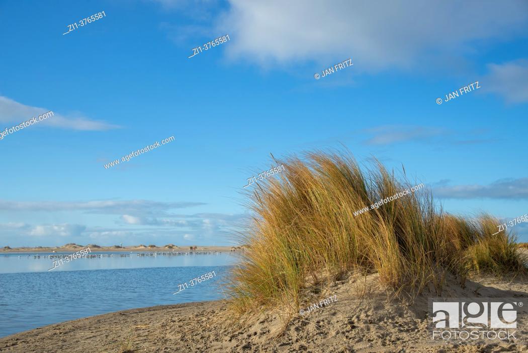 Imagen: vegetation at newly formed dunes at the Zandmotor, Monster, Kijkduin.