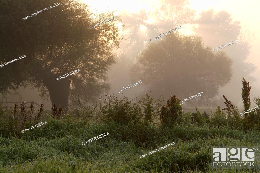 Stock Photo: Misty morning near Drohiczyn Poland.