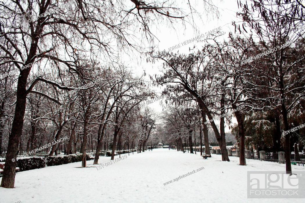 Stock Photo: Snow walk.