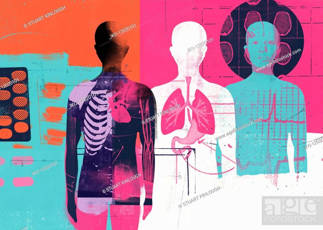 Stock Photo: Medical montage of human anatomy.