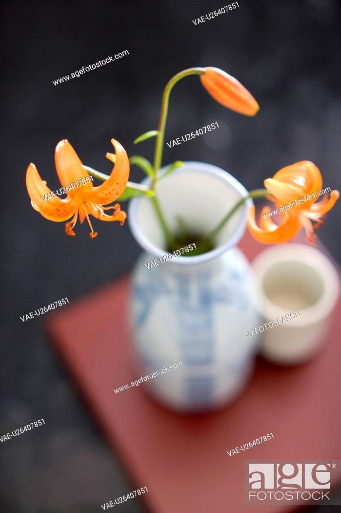Stock Photo: Lilium medeoloides.