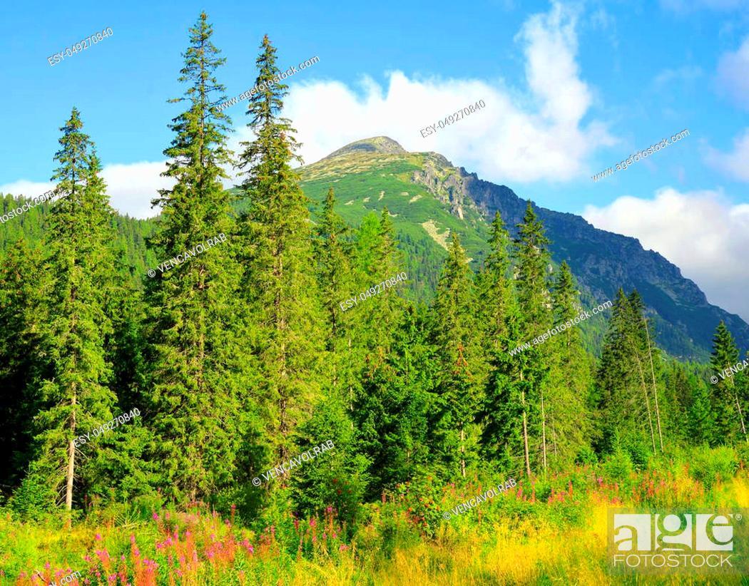 Stock Photo: Summer mountain landscape. Mengusovska Valley in Vysoke Tatry (High Tatras), Slovakia.