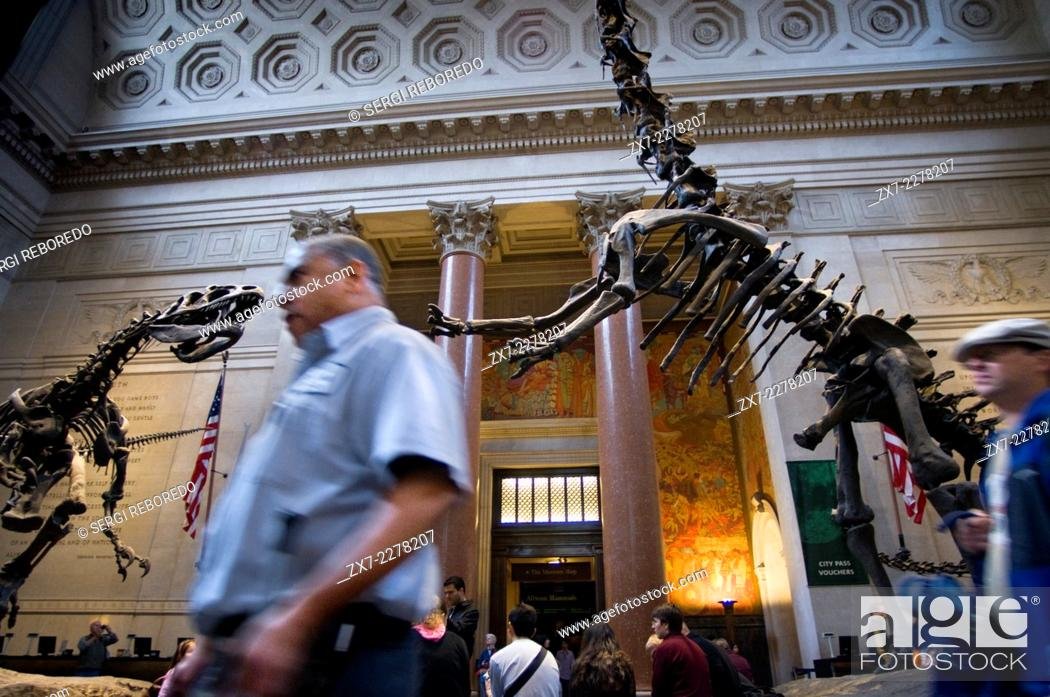 Stock Photo: American Museum of Natural History. Central Park West and 79th Street . The areas that attract attention are the three rooms devoted to dinosaurs esquelos full-.