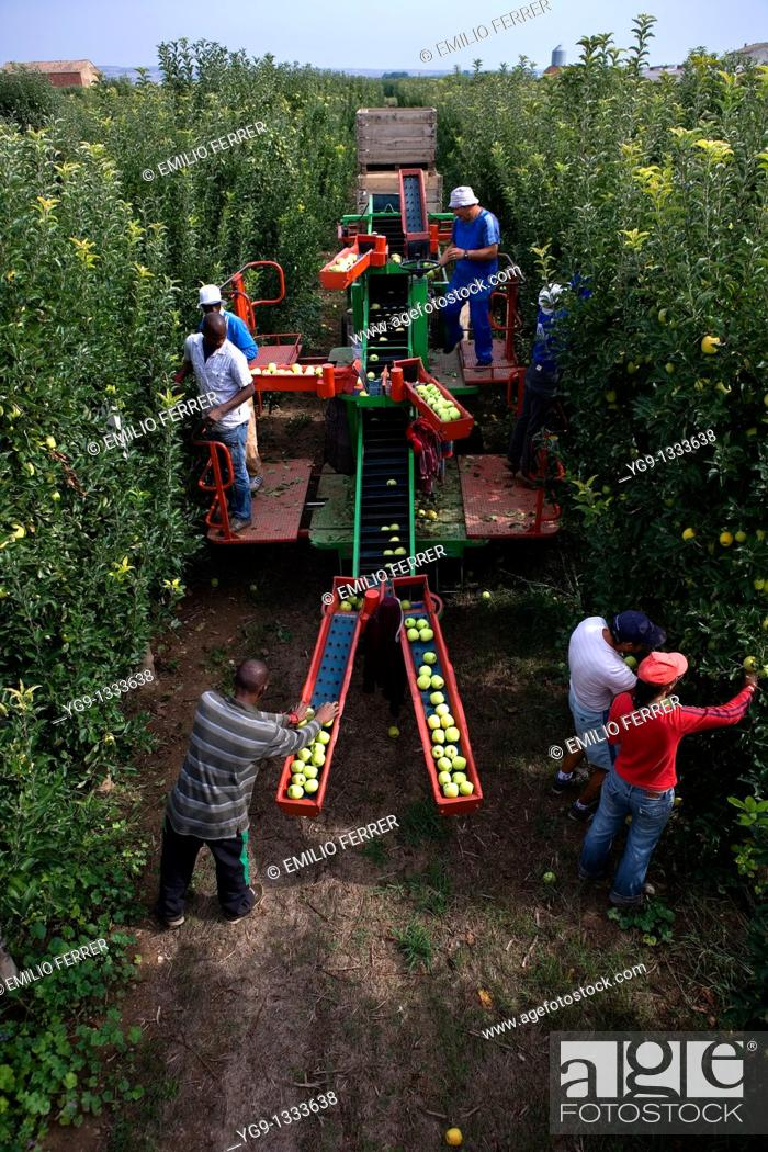 Stock Photo: Collecting apples with machine  LLeida, Spain.