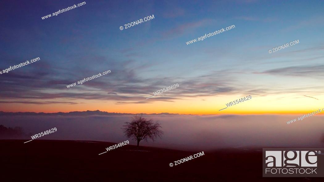 Stock Photo: Baum mit Ausblick über das Nebelmeer am Bodensee - Inversionswetterlage mit Alpenblick.