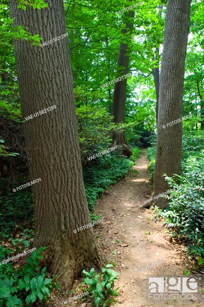 Stock Photo: Forested path.