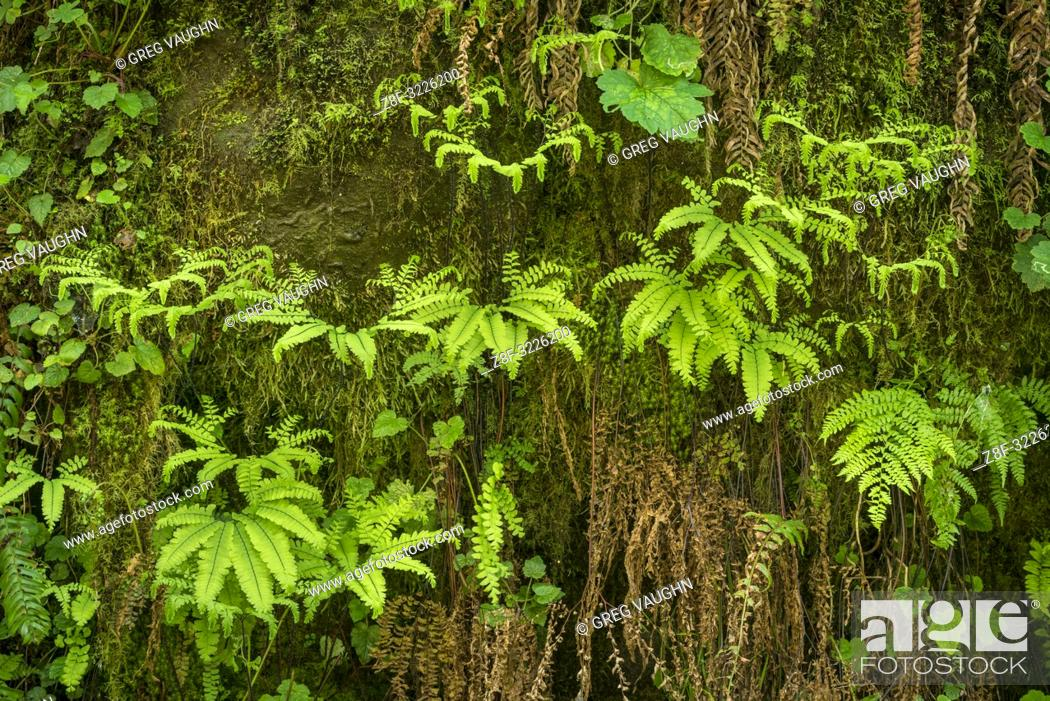 Imagen: Ferns; Elliott State Forest, Coast Range Mountains, Oregon. FR 7500.