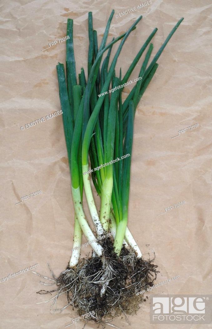 Stock Photo: Onions.