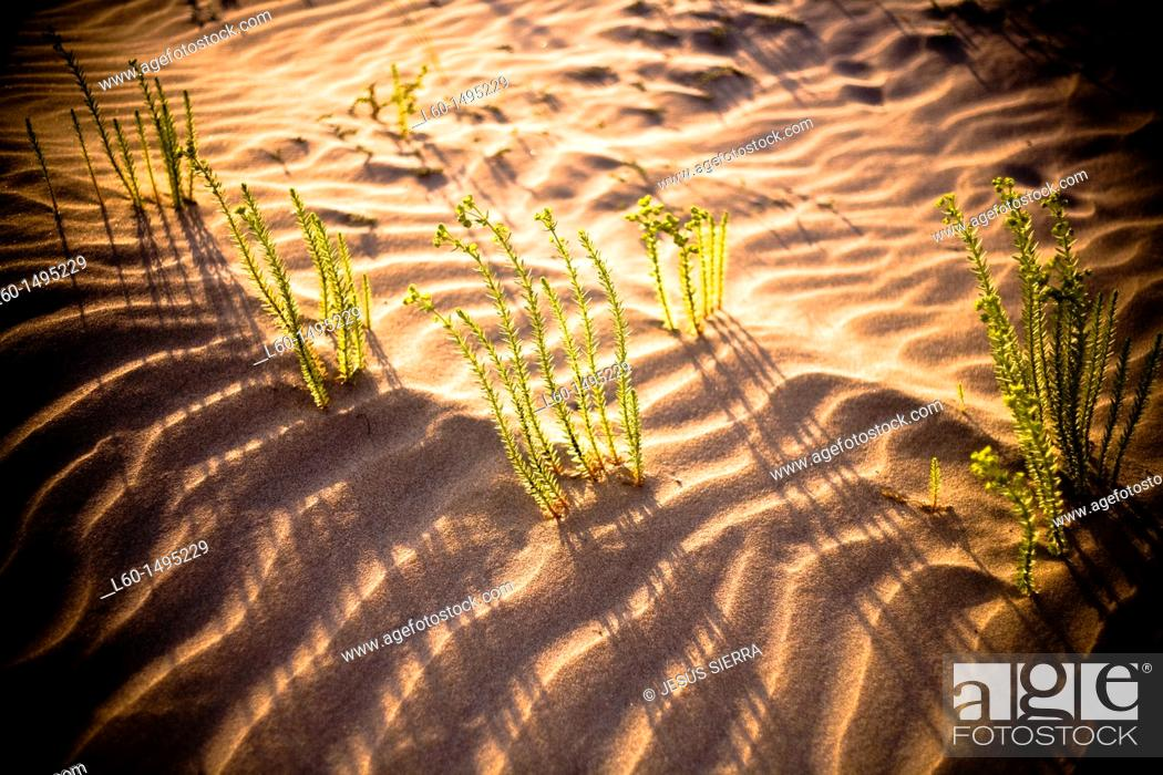 Stock Photo: Plant in Natural Park Cabo de Gata-Nijar, Almeria, Spain.