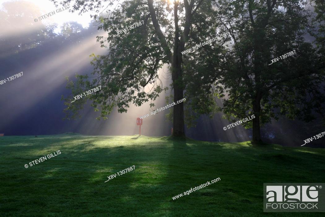 Stock Photo: Sunrise through trees, River Wharfe, Bolton Abbey, North Yorkshire, England, UK.