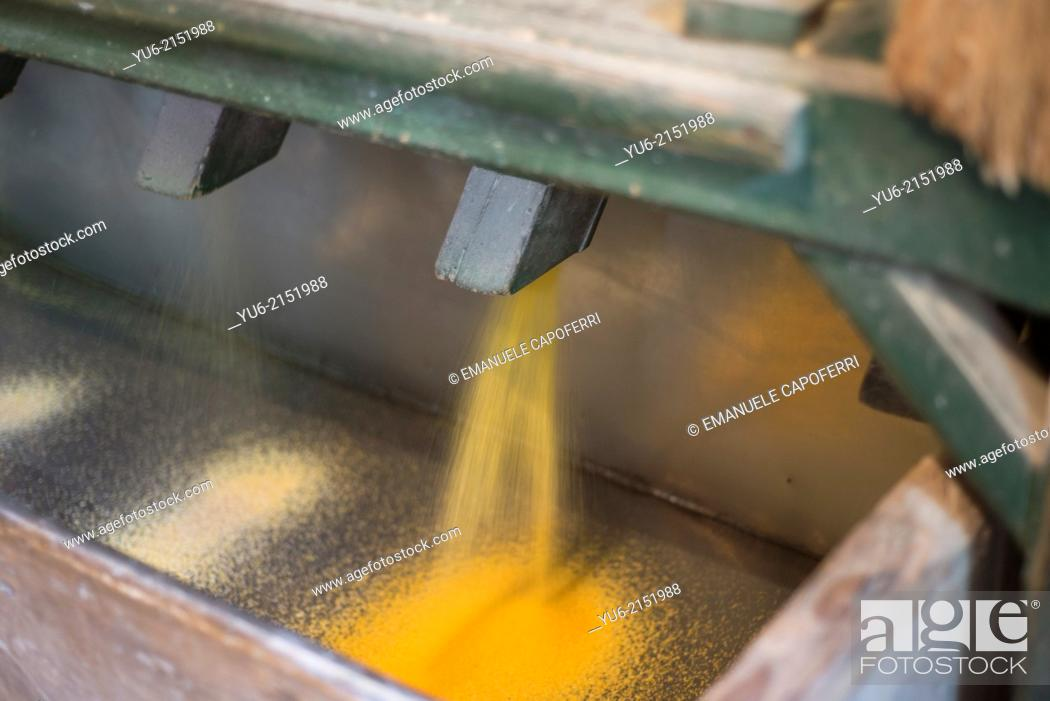 Stock Photo: Corn flour comes out from the mill.