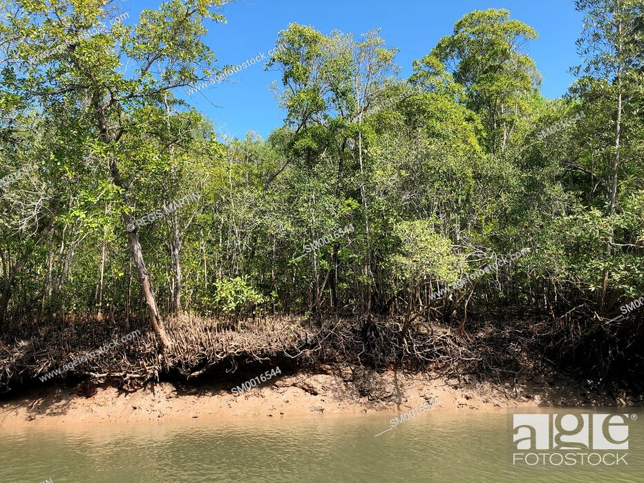 Stock Photo: Mangrove forest on the bank of a tidal creek in the Northern Territory of Australia.