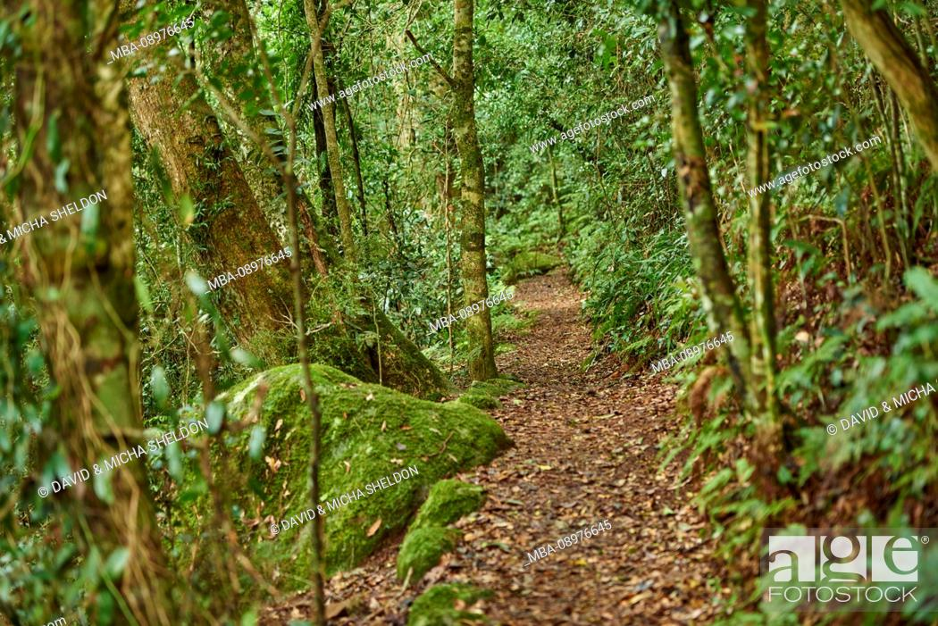 Stock Photo: Landscape, Forest Path, Lamington State Park, Queensland, Australia, Oceania.