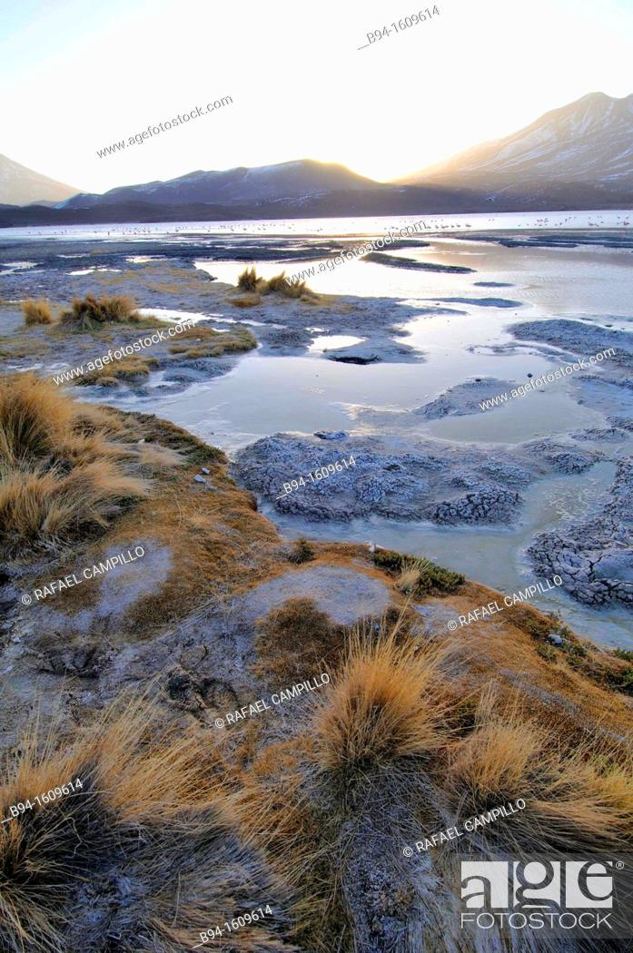 Stock Photo: Laguna Hedionda is a saline lake in the Nor Lípez Province, Potosí Department in Bolivia. It is notable for various migratory species of pink and white.