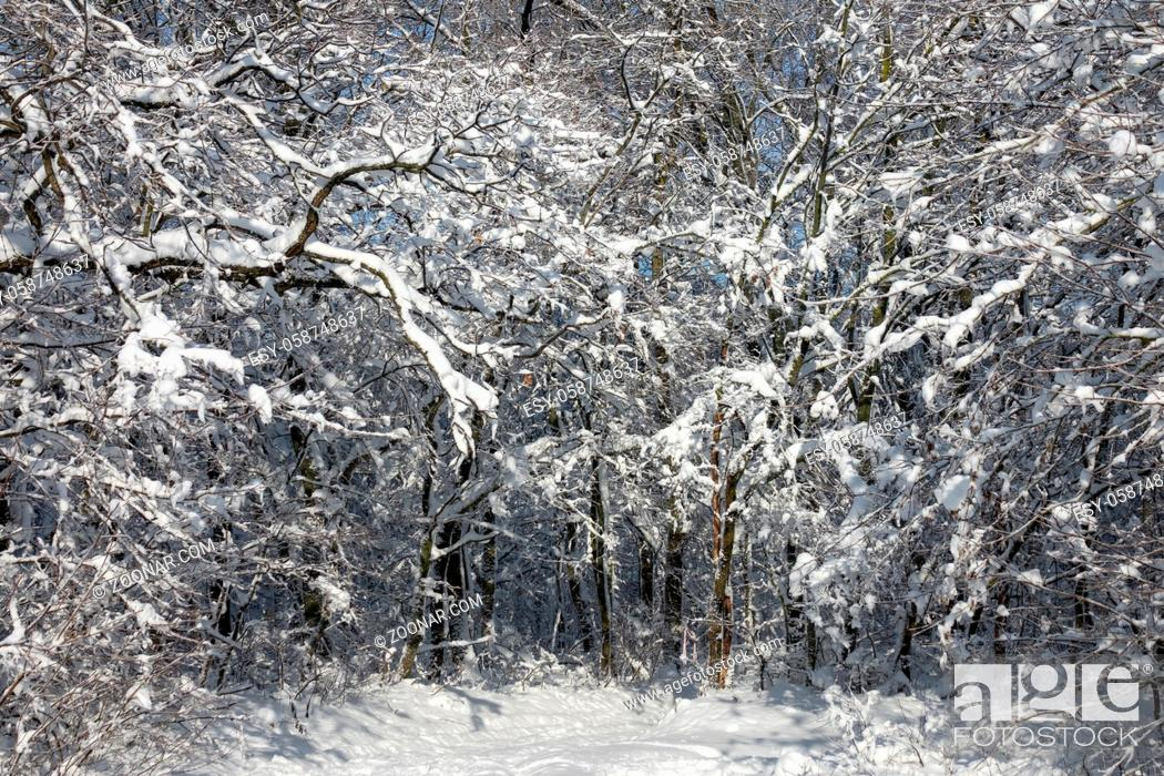 Stock Photo: Beautiful winter forest covered with snow at sunny day.