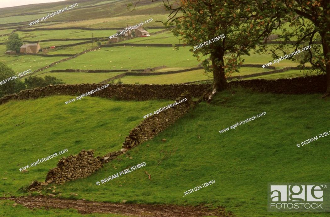 Stock Photo: Stone Wall in Yorkshire.